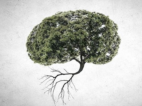 Pourquoi notre cerveau ne réagit pas à l'urgence écologique ? Sébastien Bohler