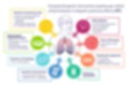 IPF, idiopathic pulmonary fibrosis, lung disease