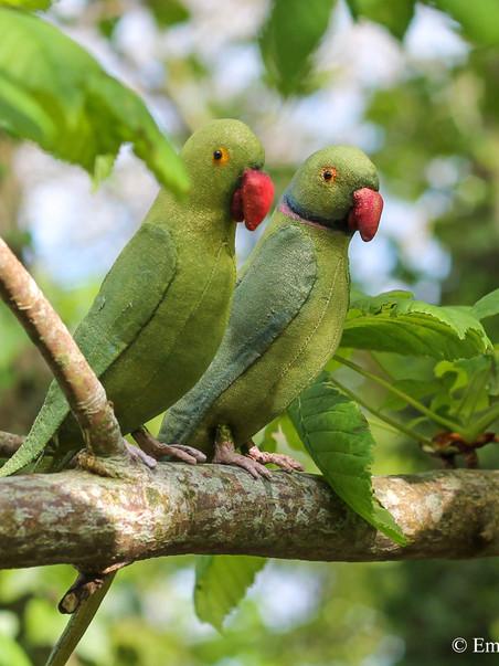 Parakeet Sewing Pattern