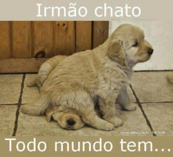 irma-chato-350x317