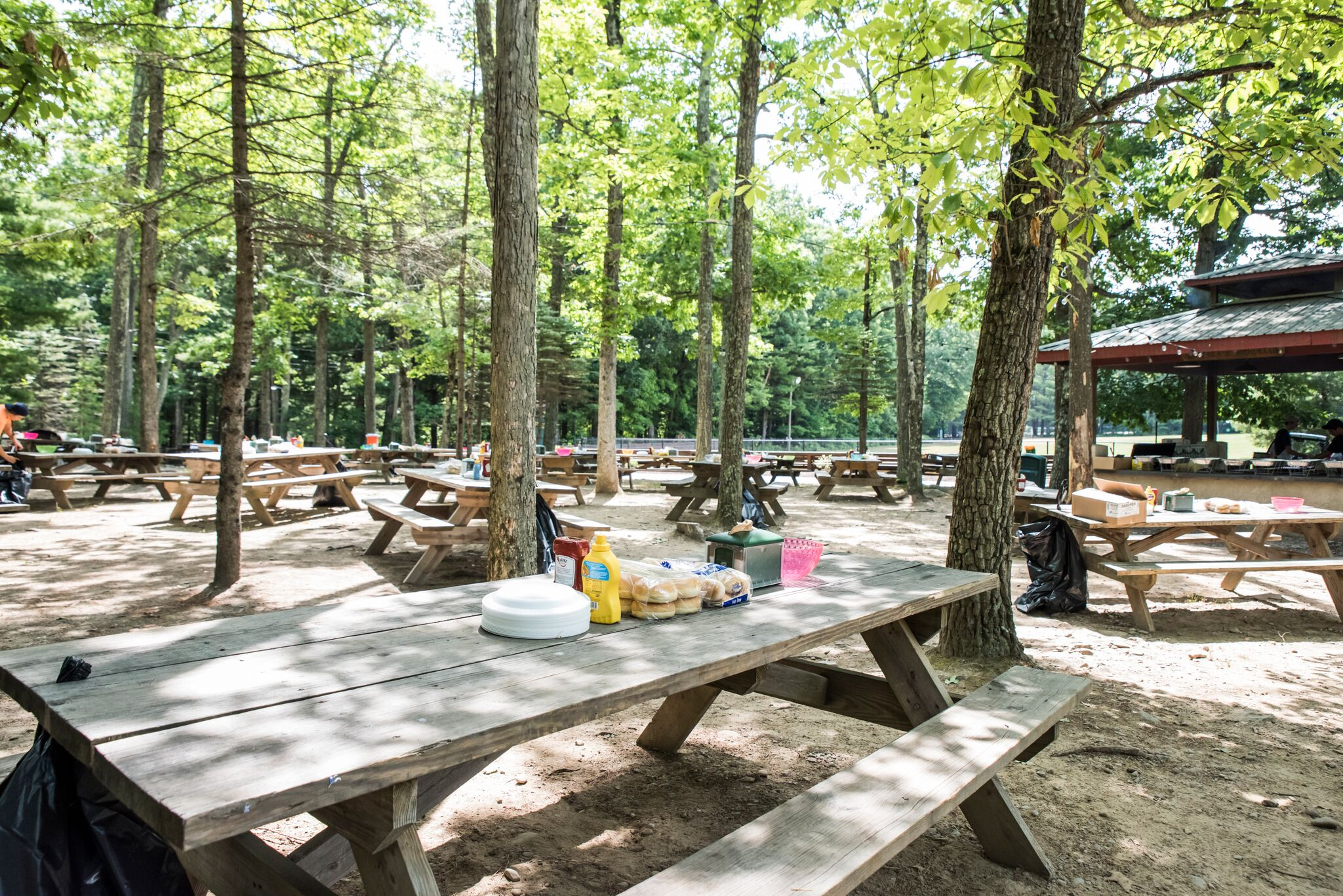 The Grove at Pine Forest Camp