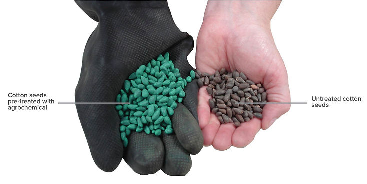 AOC-Conventional_Vs_Organic_Seeds_EN.jpg