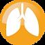 N-acetilcisteina, polmoni, biofilm, afonia, disfonia, tracheite, laringite