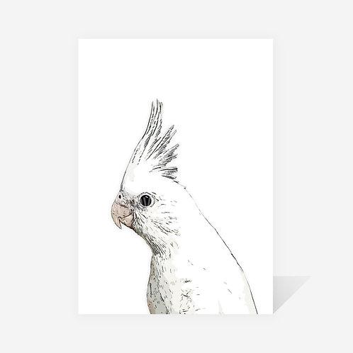 Cockatiel / David Print