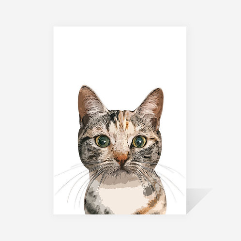 Domestic Shorthair Cat / Pixie Print