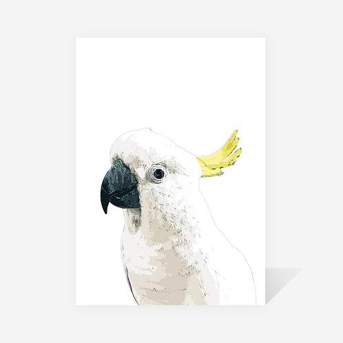 Sulphur-Crested Cockatoo / Sarah Print