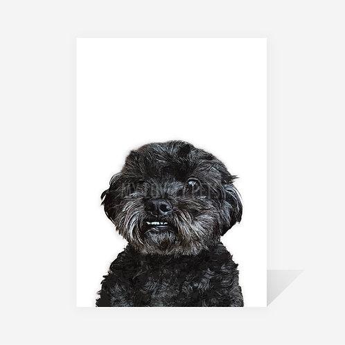 Shih-Poo / George Print