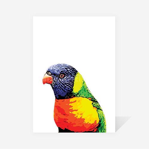 Rainbow Lorikeet / Gina Print