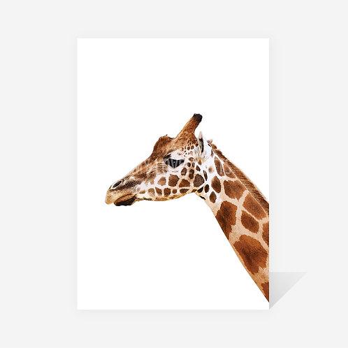 Giraffe / Jen Print