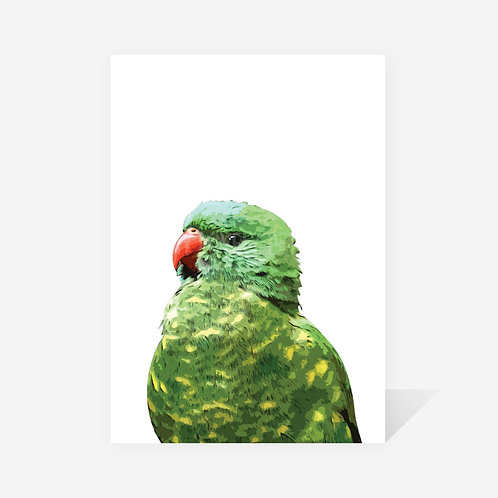 Scaly-Breasted Lorikeet / Nina Print