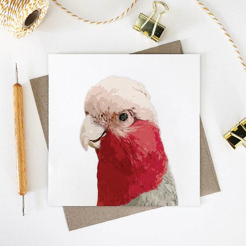Judith / Galah Greeting Card