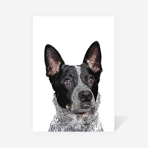 Australian Cattle Dog / Molly Print