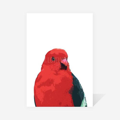 Australian King Parrot / Karen Print