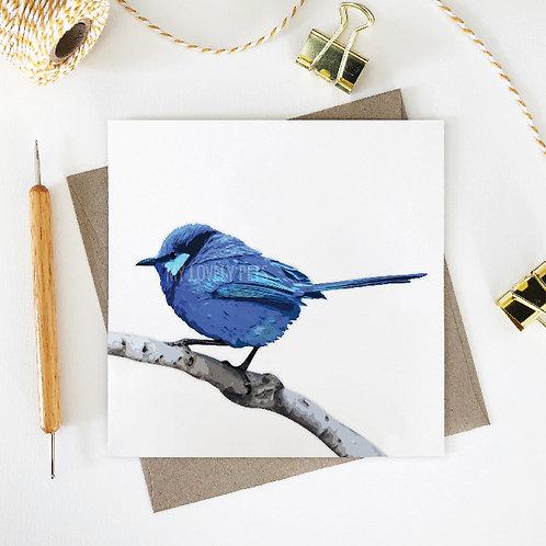 Splendid Fairy Wren, Australian Animal, Greeting Card, Gift Card