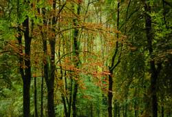 arbreà l'automne