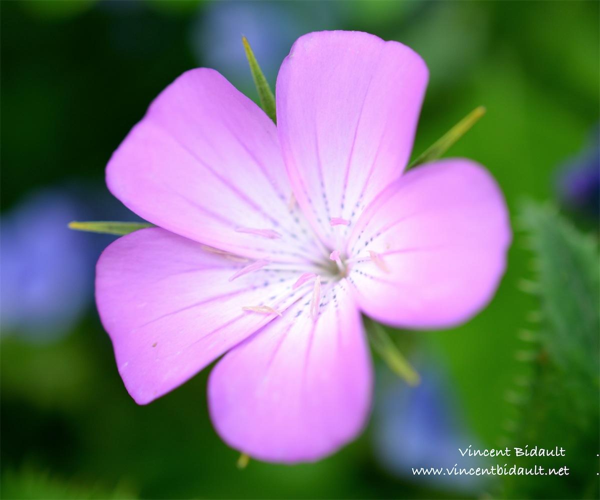 fleur1.jpg
