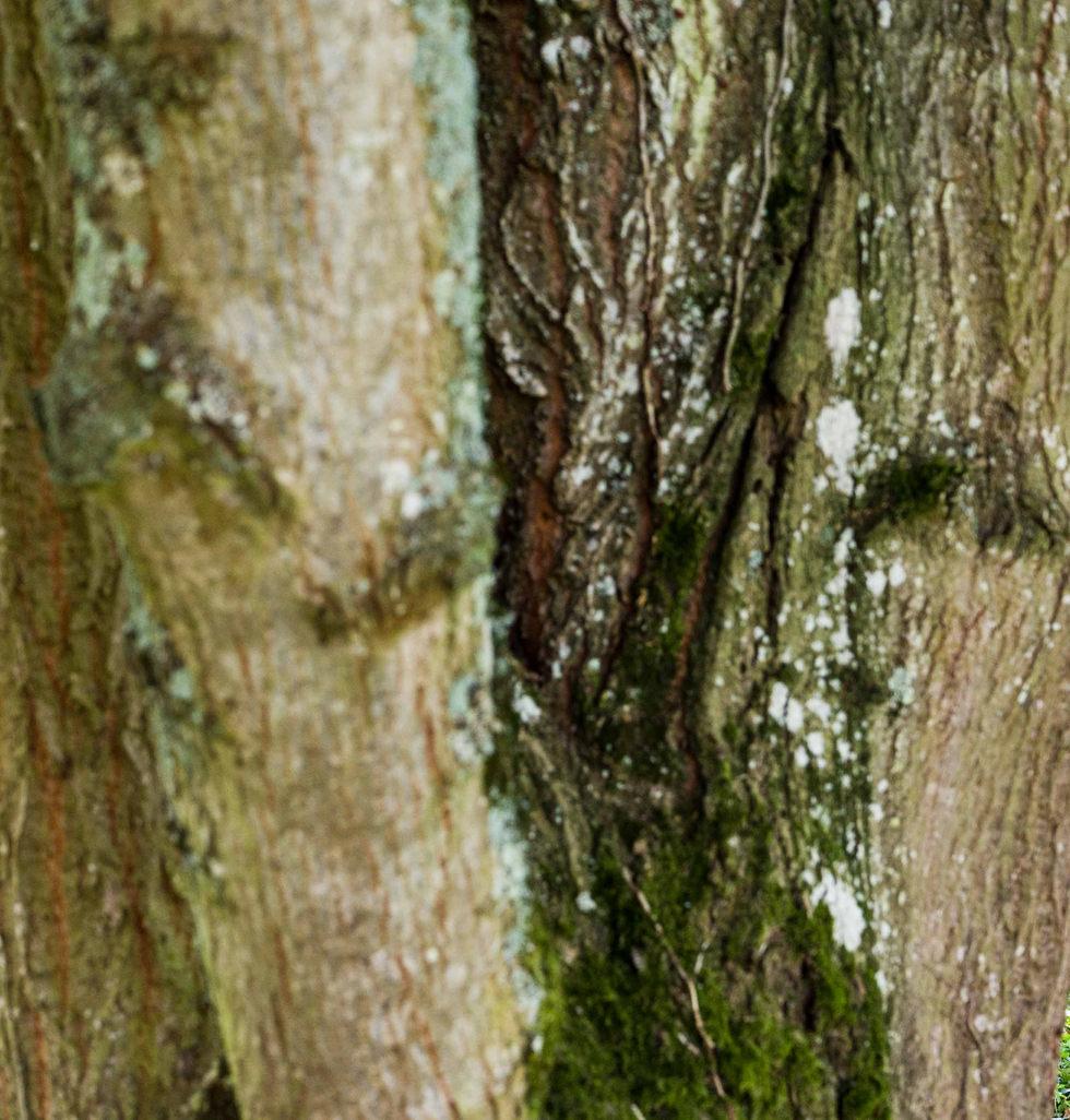 les mariés se cachent derriere un arbre