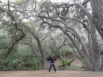 Qigong with the California Live Oaks.