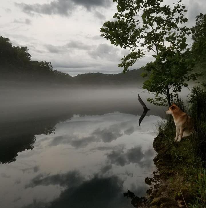 river pic fog and fuji.jpg