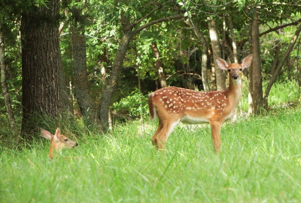 2 deer.jpg