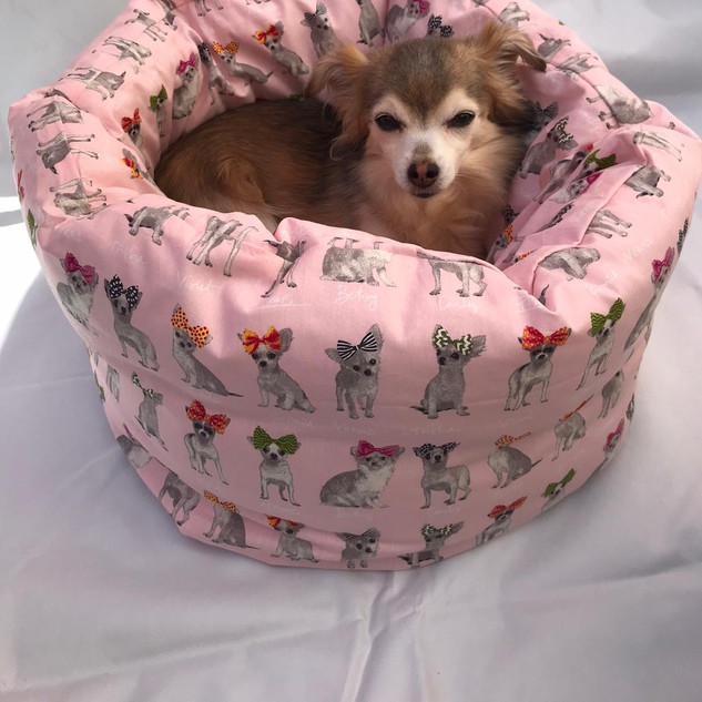 Tilly loving her deluxe bed all to herself