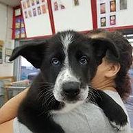 Puppy 21.jpg