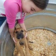 Puppy 20.jpg