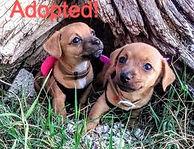 adopted-1_edited.jpg
