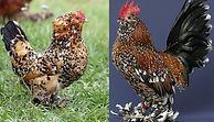 Mille Fleur Chicken