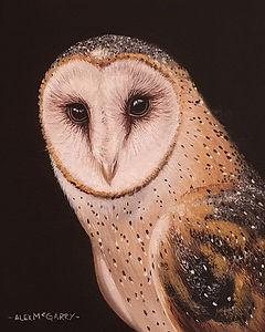 Twit-twoo....its friday!!! #owl #barnowl