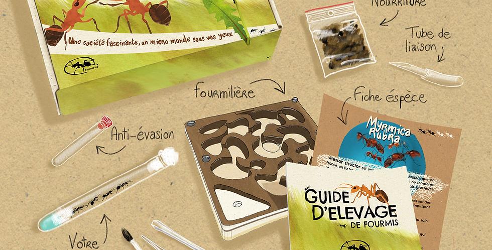 Kit d'élevage Myrmica rubra