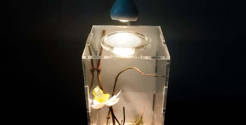 Terrarium pour mantes (petites espèces)