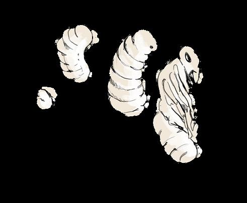 larve.png
