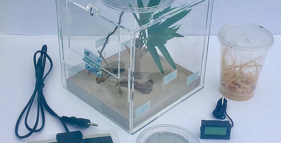 Kit d'élevage de mante