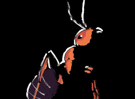 L'impact des fourmis sur l'environnement (Partie 1)