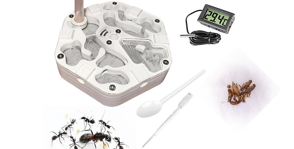 Kit d'élevage AlvéoFonda Camponotus cruentatus
