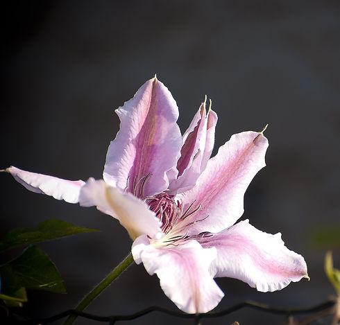 flora-5087538_1920_edited.jpg