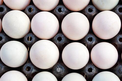 Duck eggs - Bakers Dozen