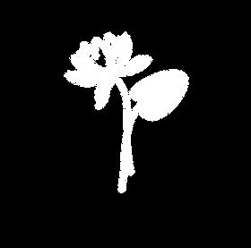 Seerose_wei·_no_bg.png