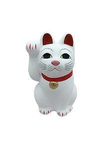 Jane L cat.jpg