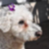 hundesalon whunderschön