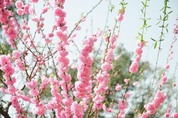 pink-flowers-1687944.jpg