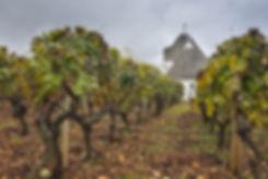 Vignes-Trullo-Italie.jpeg