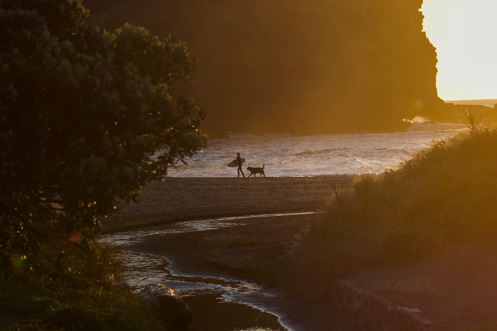 Surfing at Piha Beach with Dog