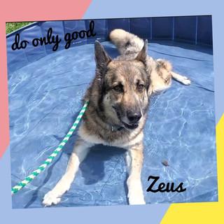 Zeus the Shepherd