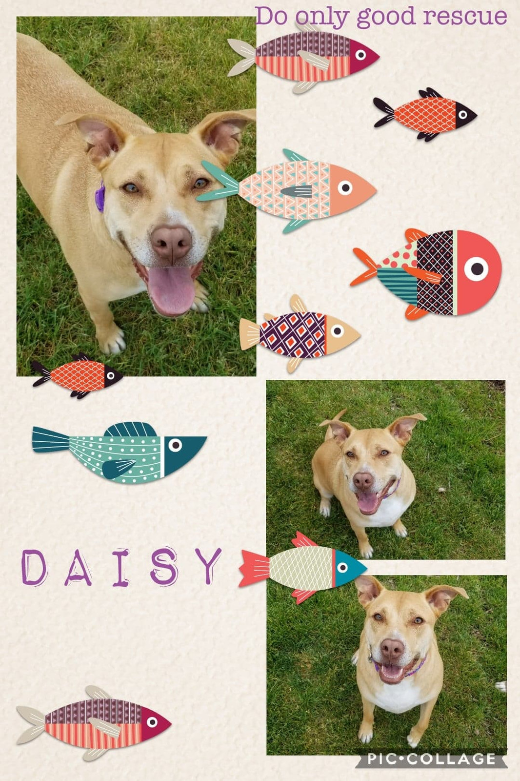 Hi Im Daisy And I Am A Very Sweet Dog Came In With My Buddy Jake 314762 We Really Like Each Other Are Both Big Dogs So Ample Space