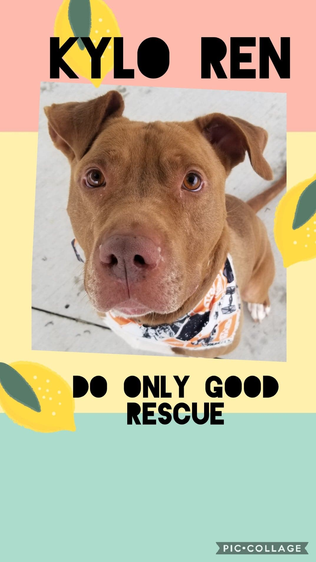 Do Only Good Rescue | Michigan | DOG Rescue
