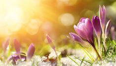 je-decouvre-le-printemps.jpg