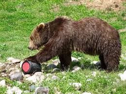 BEAR KEGS and PRICING STRATEGY: 5 Lessons Learned