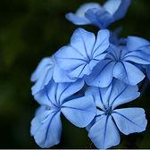 Fleurs Bach.jpg